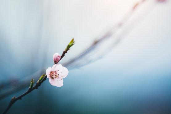Een ode aan de lente