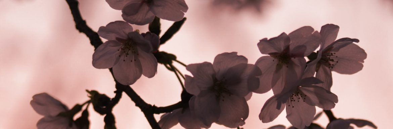 Ontdek de verborgen kracht van deze vijf wilde bloemen