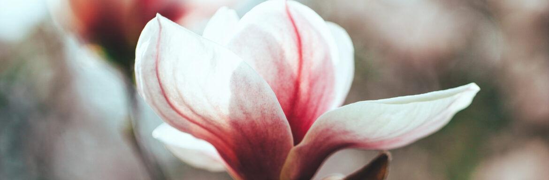 Je leven wordt lichter als je bewust leert kiezen voor liefde