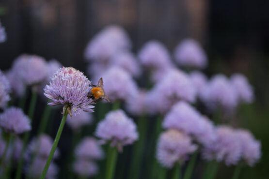Vier manieren om de bloemetjes en bijtjes te helpen op Wereldmilieudag