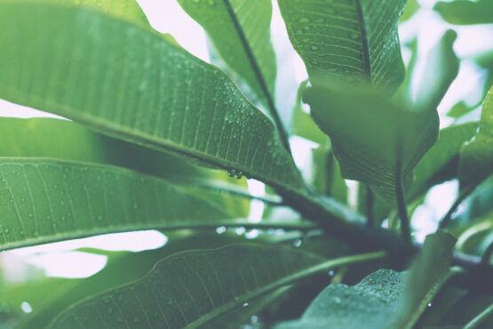 Planten zijn intelligenter dan je denkt, en dit is waarom