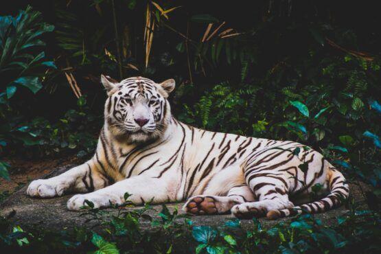 Met deze 3 tips wakker je de tijger in jezelf aan