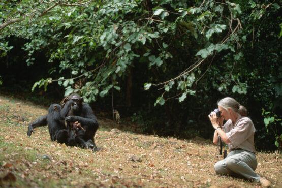 Wil je iets betekenen voor de wereld? Luister dan naar deze 3 tips van Jane Goodall