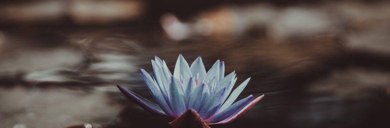 Waarom een gelukkiger leven voor iedereen bereikbaar is (volgens de Dalai Lama)