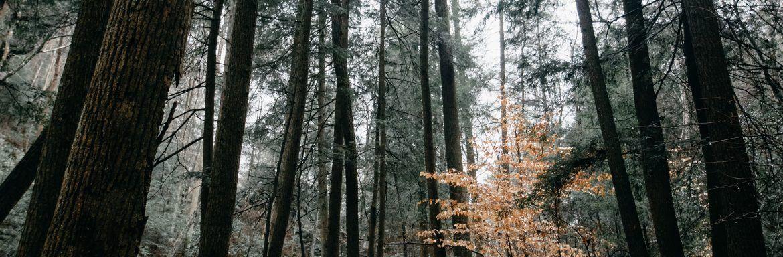 De pracht van het boswachtersvak: vier inspirerende Instagram accounts om nu te volgen