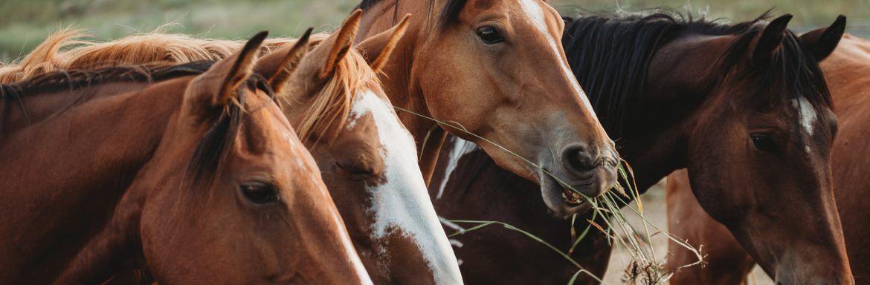 De symbolische betekenis van dieren: wat wil jouw krachtdier je vertellen?